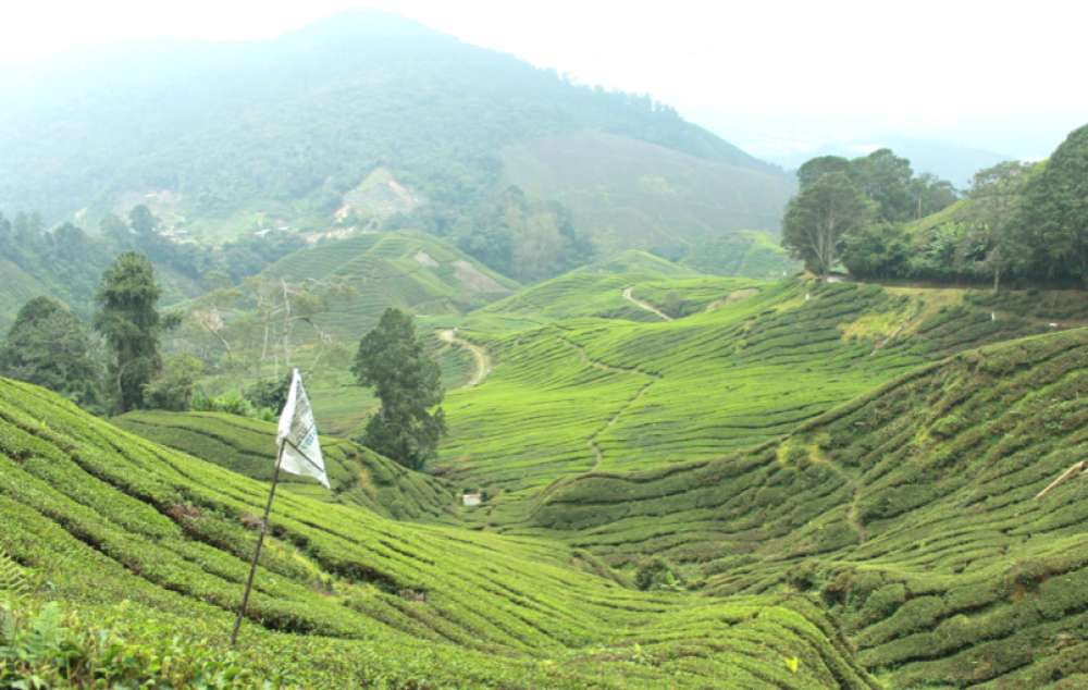 cameron highlands famille